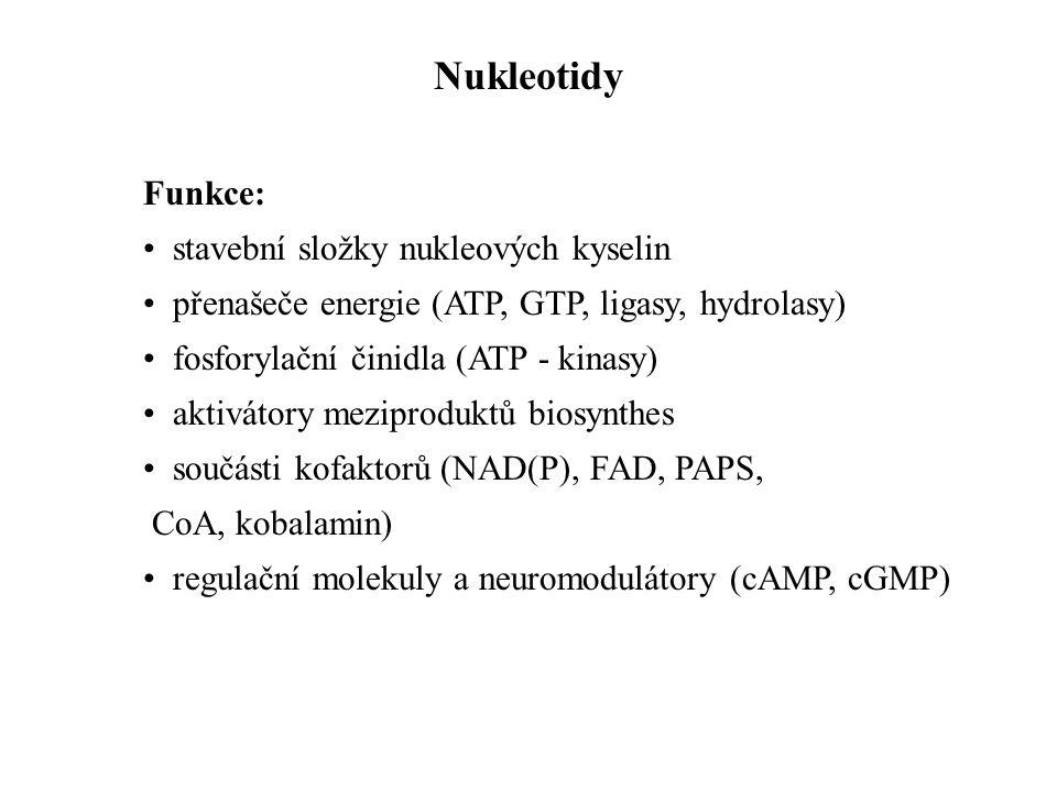 Funkce: stavební složky nukleových kyselin přenašeče energie (ATP, GTP, ligasy, hydrolasy) fosforylační činidla (ATP - kinasy) aktivátory meziproduktů
