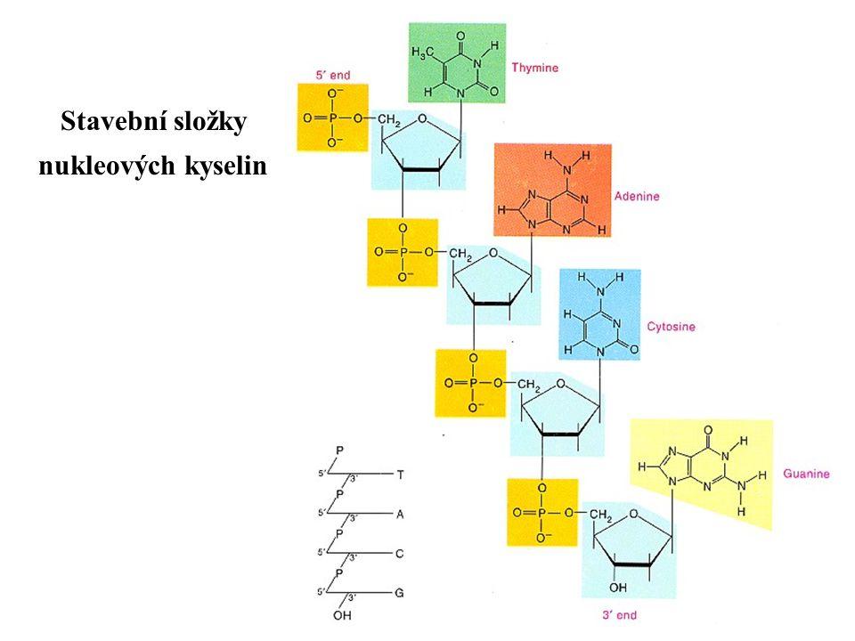 Stavební složky nukleových kyselin