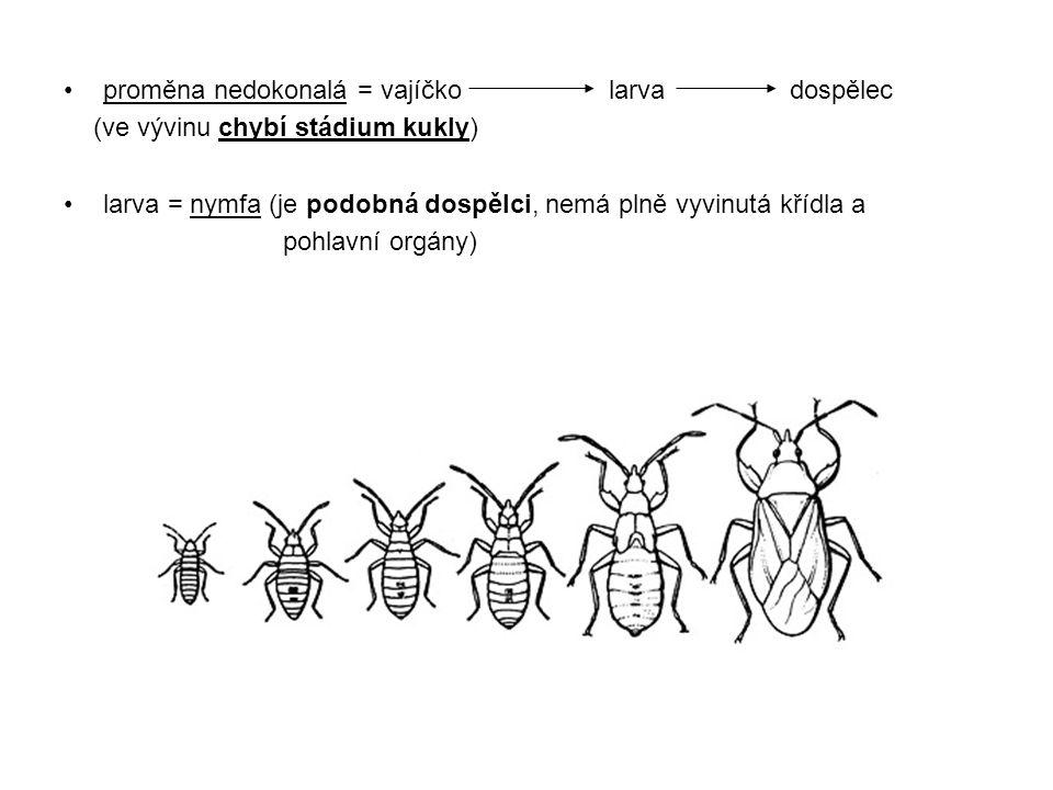proměna nedokonalá = vajíčko larva dospělec (ve vývinu chybí stádium kukly) larva = nymfa (je podobná dospělci, nemá plně vyvinutá křídla a pohlavní o