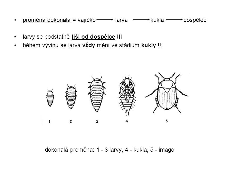 proměna dokonalá = vajíčko larva kukla dospělec larvy se podstatně liší od dospělce !!! během vývinu se larva vždy mění ve stádium kukly !!! dokonalá