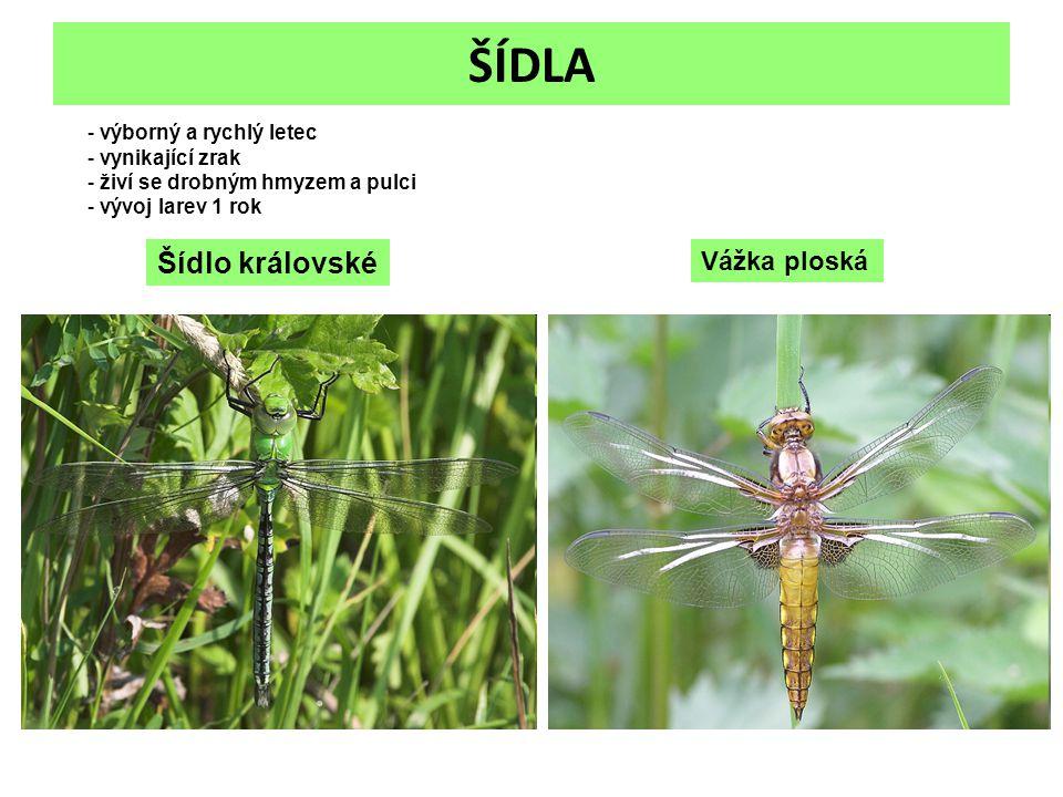 ŠÍDLA Vážka ploská Šídlo královské - výborný a rychlý letec - vynikající zrak - živí se drobným hmyzem a pulci - vývoj larev 1 rok
