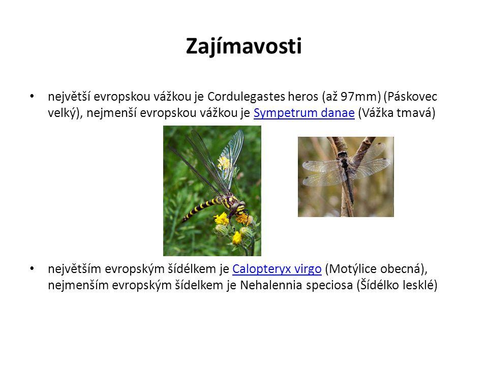 Zajímavosti největší evropskou vážkou je Cordulegastes heros (až 97mm) (Páskovec velký), nejmenší evropskou vážkou je Sympetrum danae (Vážka tmavá)Sym
