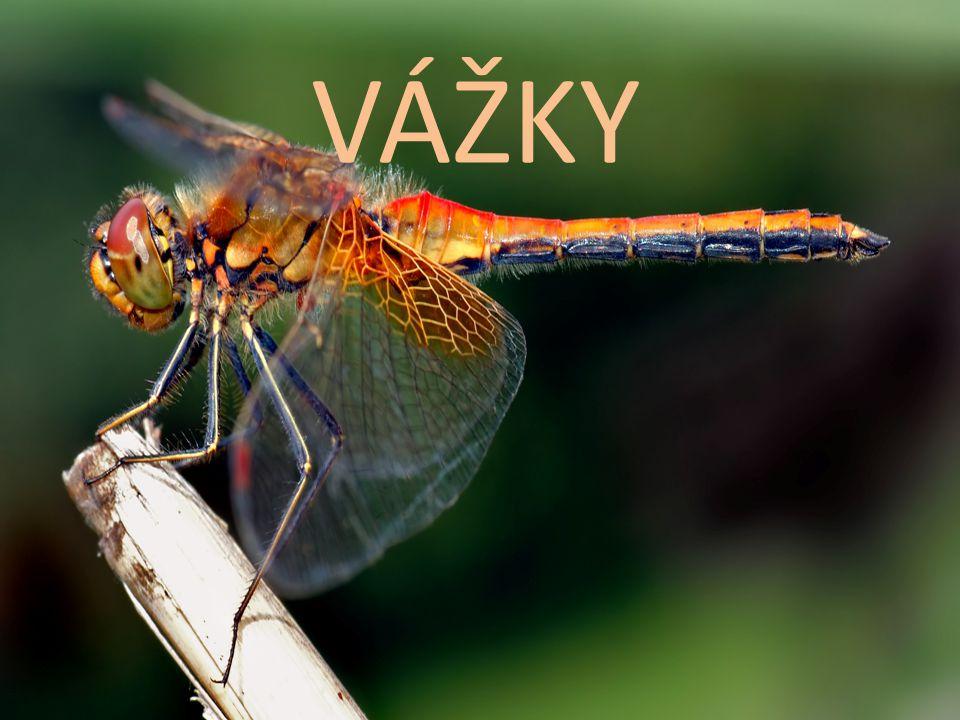 dva páry dlouhých křídel s hustou žilnatinou složené oči ústní ústrojí kousací vajíčka kladou do vody proměna nedokonalá nymfy, žijí ve vodě a jsou dravé