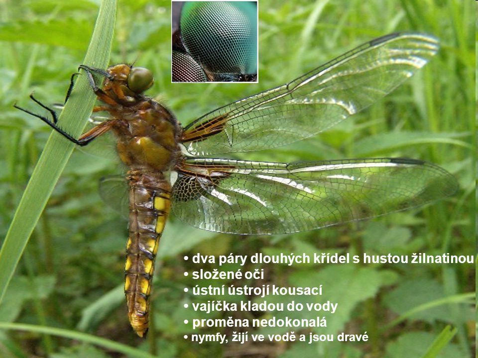 dva páry dlouhých křídel s hustou žilnatinou složené oči ústní ústrojí kousací vajíčka kladou do vody proměna nedokonalá nymfy, žijí ve vodě a jsou dr