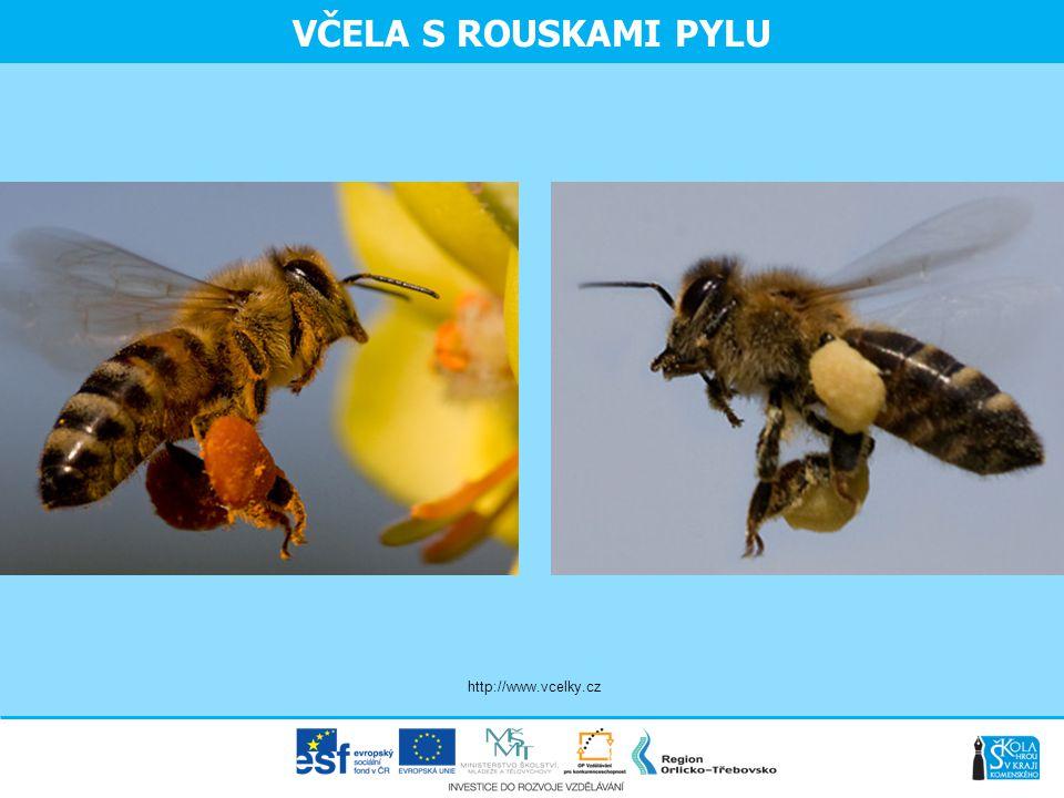 VČELA S ROUSKAMI PYLU http://www.vcelky.cz
