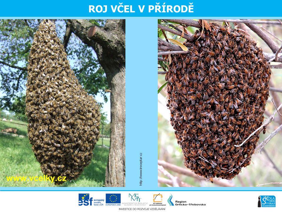 ROJ VČEL V PŘÍRODĚ http://www.ireceptar.cz