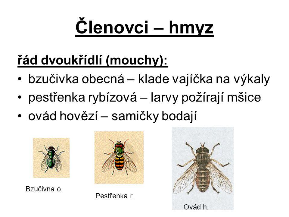 Členovci – hmyz řád dvoukřídlí (mouchy): bzučivka obecná – klade vajíčka na výkaly pestřenka rybízová – larvy požírají mšice ovád hovězí – samičky bod