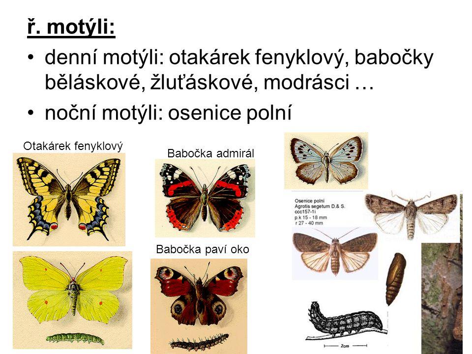 ř. motýli: denní motýli: otakárek fenyklový, babočky běláskové, žluťáskové, modrásci … noční motýli: osenice polní Babočka paví oko Babočka admirál Ot