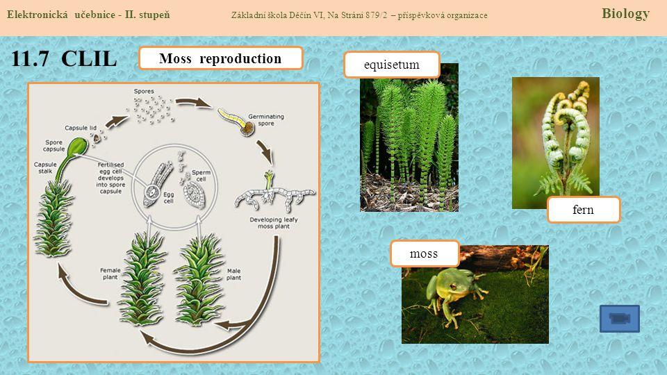 11.7 CLIL Elektronická učebnice - II. stupeň Základní škola Děčín VI, Na Stráni 879/2 – příspěvková organizace Biology Moss reproduction equisetum fer