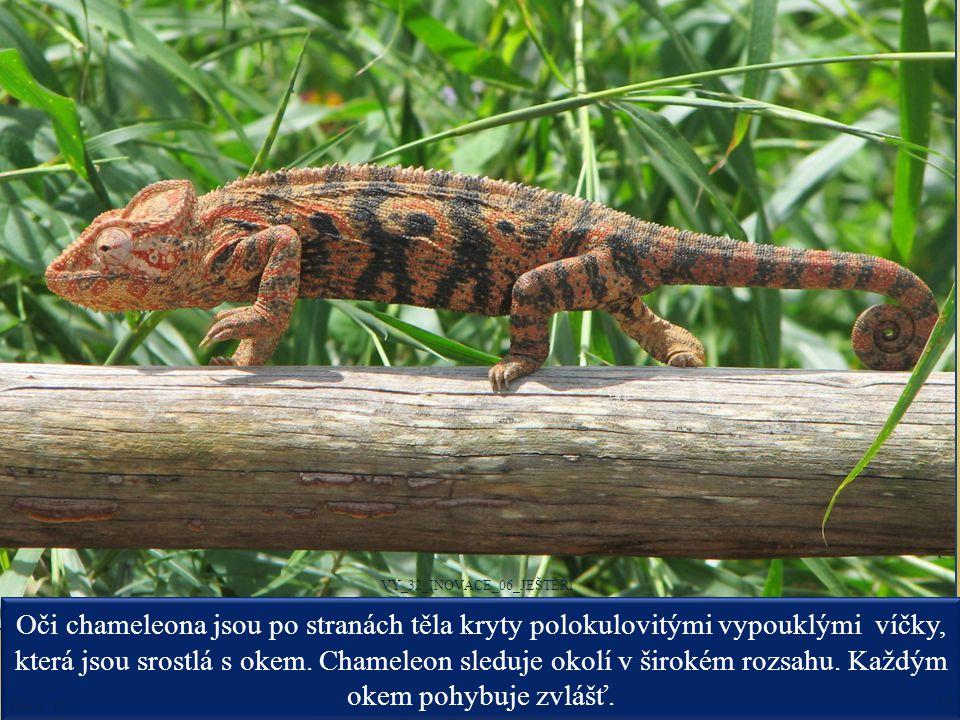 Oči chameleona jsou po stranách těla kryty polokulovitými vypouklými víčky, která jsou srostlá s okem. Chameleon sleduje okolí v širokém rozsahu. Každ
