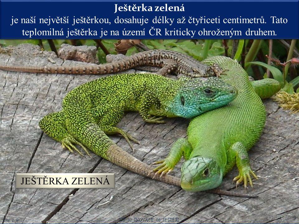 Ještěrka zelená je naší největší ještěrkou, dosahuje délky až čtyřiceti centimetrů. Tato teplomilná ještěrka je na území ČR kriticky ohroženým druhem.