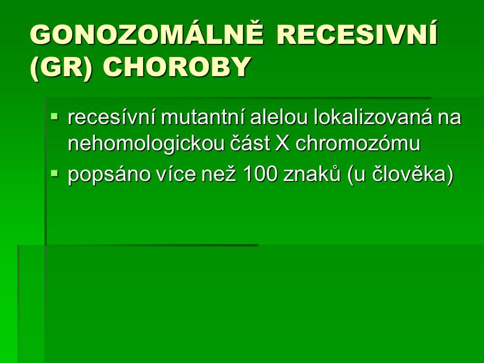 GONOZOMÁLNĚ RECESIVNÍ (GR) CHOROBY  recesívní mutantní alelou lokalizovaná na nehomologickou část X chromozómu  popsáno více než 100 znaků (u člověka)