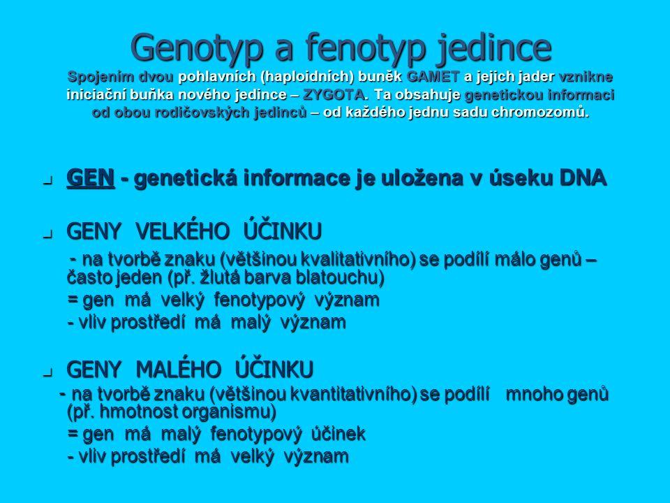 Genotyp a fenotyp jedince Spojením dvou pohlavních (haploidních) buněk GAMET a jejich jader vznikne iniciační buňka nového jedince – ZYGOTA. Ta obsahu