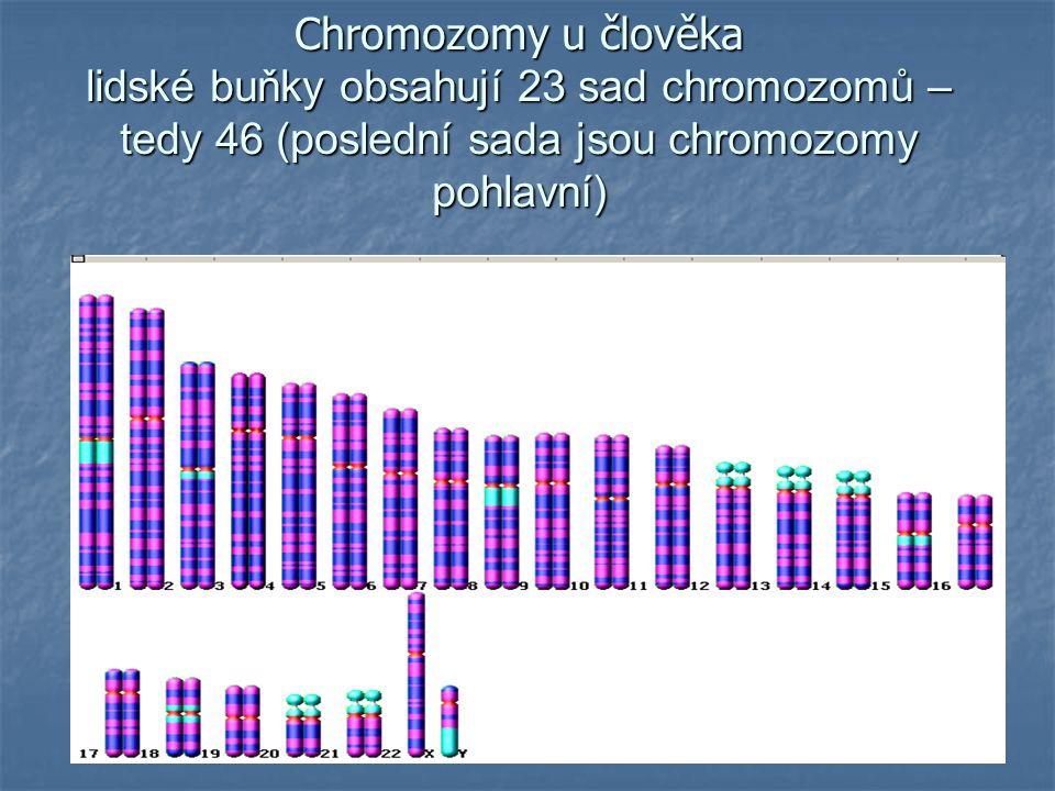 MITÓZA – buněčné dělení tělních buněk (z jedné buňky vznikají dvě, aniž by došlo ke změně genetické informace) dále jen pro pochopení – nebude se zkoušet profáze – spiralizace chromozomů metafáze – tvorba dělícího vřeténka, uchycení v oblasti centromery v oblasti centromery anafáze – podélné štěpení na dvě chromatidy telofáze – vznik dceřiných jader a dceřiných buněk interfáze – obnovení dvouchromatidové stavby chromozomu (okopírování podle jedné původní) chromozomu (okopírování podle jedné původní)