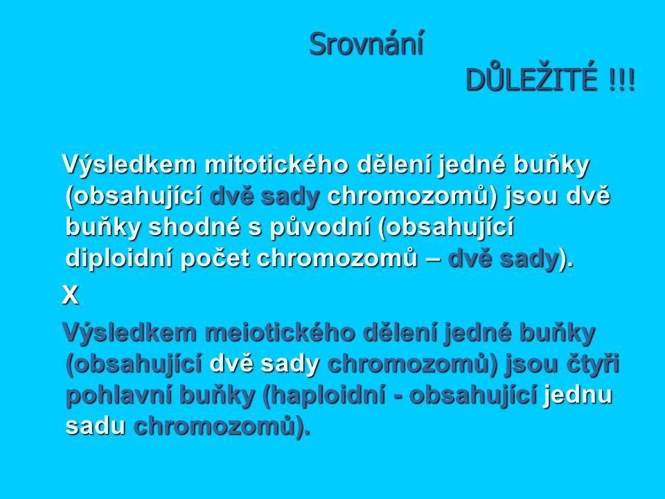 Srovnání DŮLEŽITÉ !!! Výsledkem mitotického dělení jedné buňky (obsahující dvě sady chromozomů) jsou dvě buňky shodné s původní (obsahující diploidní