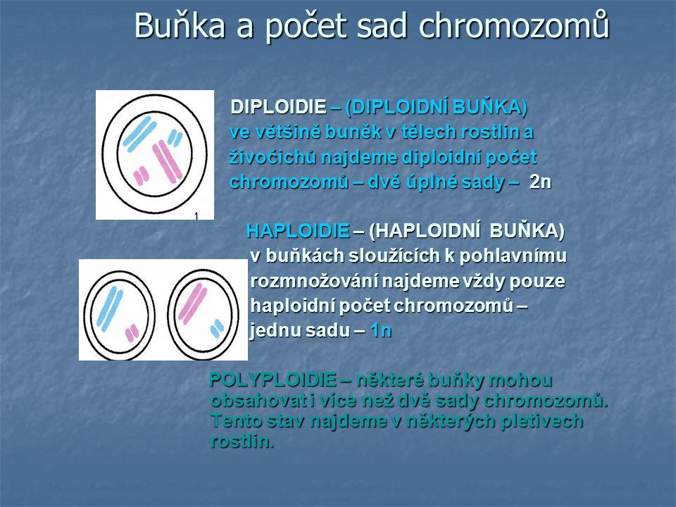 Chromozomové určení pohlaví u nejvyspělejších organismů s odděleným pohlavím gonochoristů (opak hermafrodita – nerozlišené pohlaví – má samčí i samičí gonády) Savčí typ chromozómového určení pohlaví pohlavní chromozomy – označovány X a Y kombinace XX - ženské pohlaví kombinace XX - ženské pohlaví XY - mužské pohlaví XY - mužské pohlaví XX XY XX XY genotyp XX XX XY XY fenotyp ♀ ♀ ♂ ♂