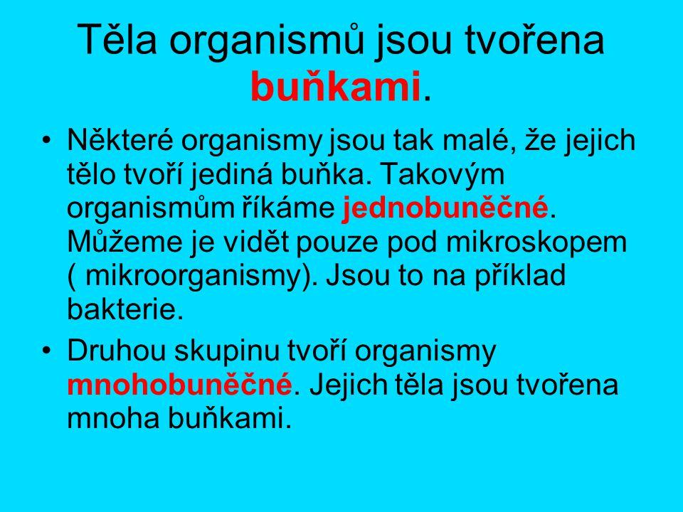 Těla organismů jsou tvořena buňkami.