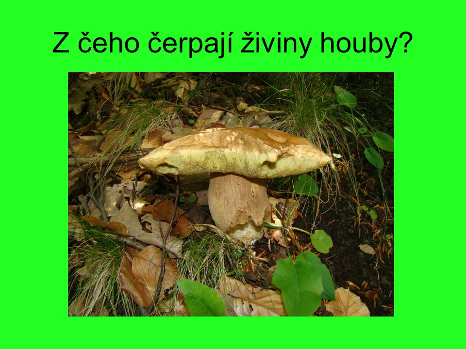 Z čeho čerpají živiny houby?