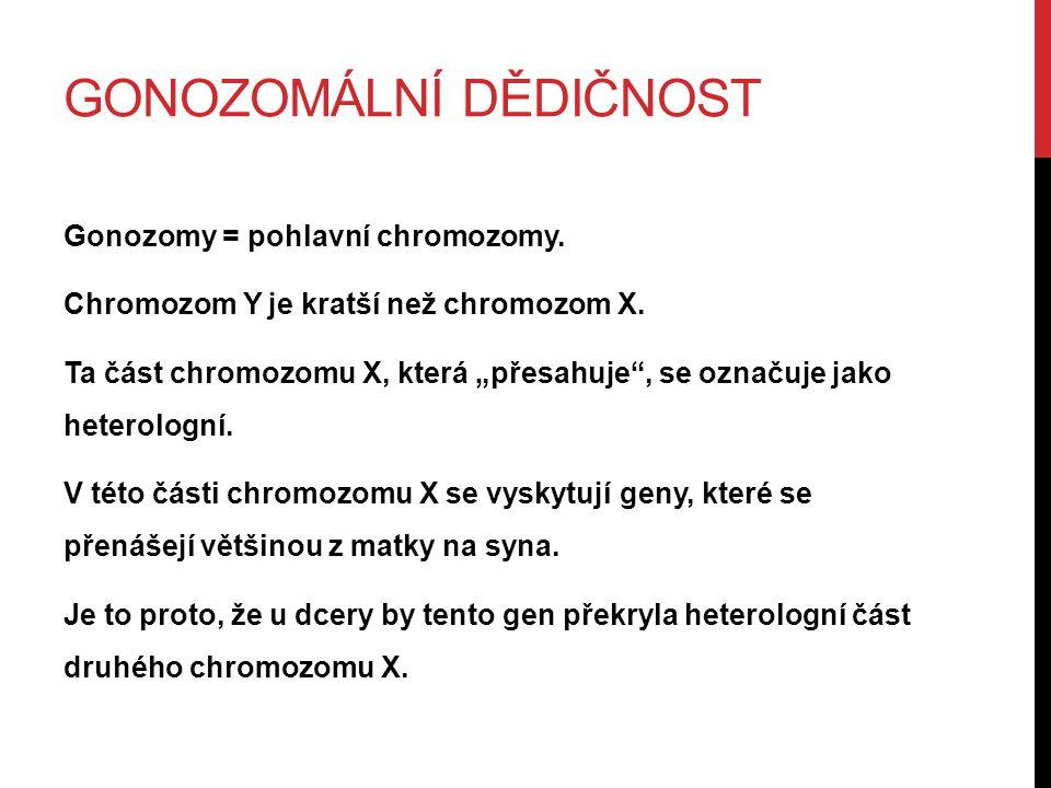"""GONOZOMÁLNÍ DĚDIČNOST Gonozomy = pohlavní chromozomy. Chromozom Y je kratší než chromozom X. Ta část chromozomu X, která """"přesahuje"""", se označuje jako"""