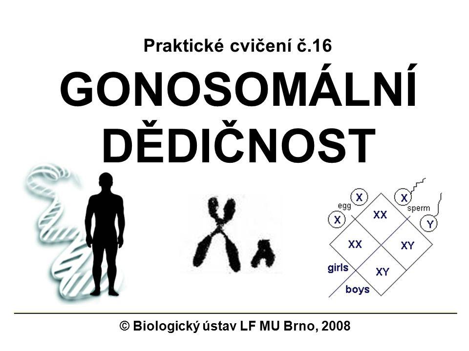 GONOSOMÁLNÍ DĚDIČNOST © Biologický ústav LF MU Brno, 2008 Praktické cvičení č.16