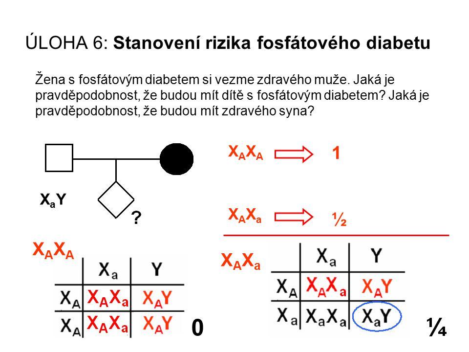 ÚLOHA 6: Stanovení rizika fosfátového diabetu Žena s fosfátovým diabetem si vezme zdravého muže. Jaká je pravděpodobnost, že budou mít dítě s fosfátov