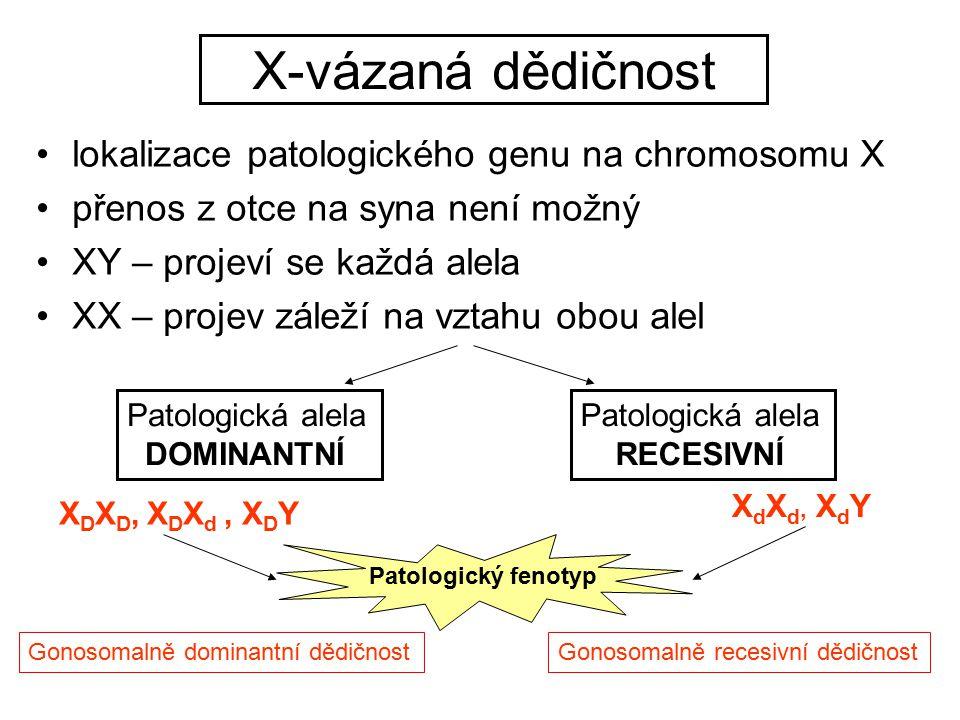 X-vázaná dědičnost lokalizace patologického genu na chromosomu X přenos z otce na syna není možný XY – projeví se každá alela XX – projev záleží na vz