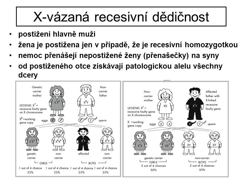 X-vázaná recesivní dědičnost postiženi hlavně muži žena je postižena jen v případě, že je recesivní homozygotkou nemoc přenášejí nepostižené ženy (pře