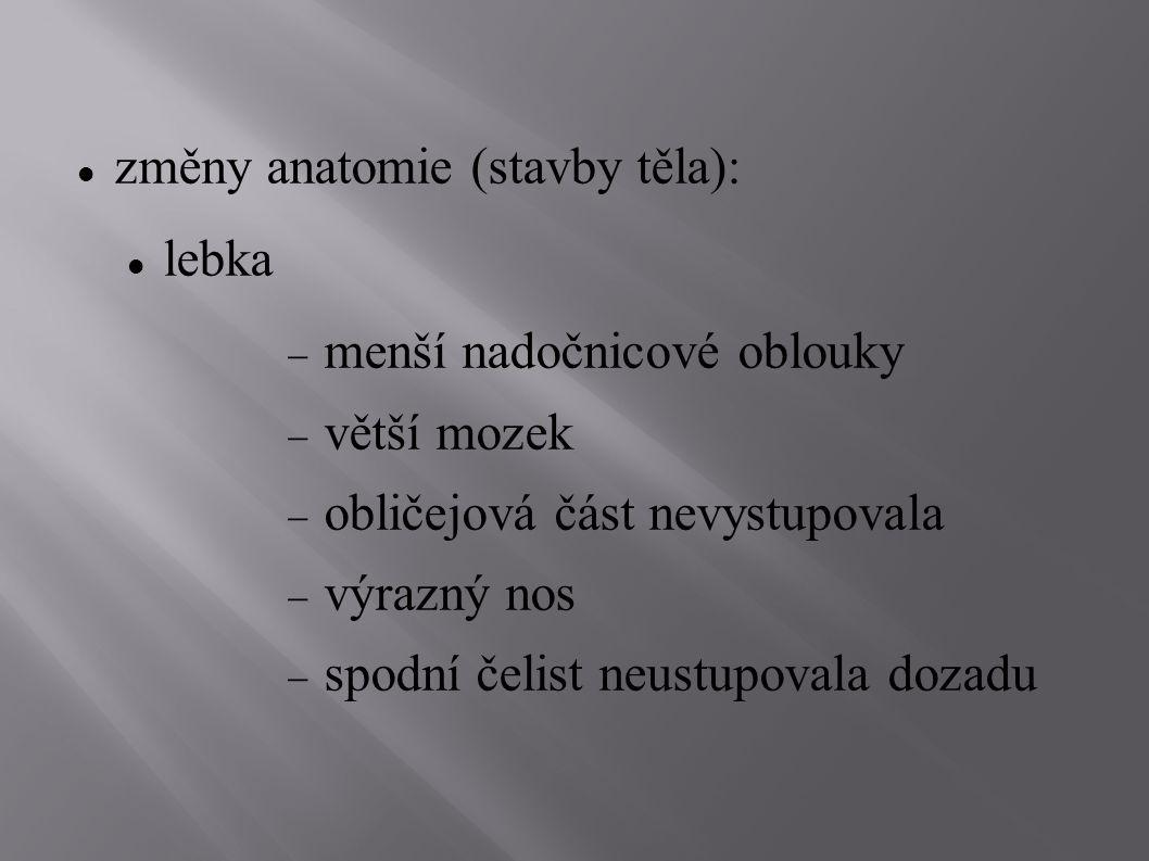 změny anatomie (stavby těla): lebka  menší nadočnicové oblouky  větší mozek  obličejová část nevystupovala  výrazný nos  spodní čelist neustupova