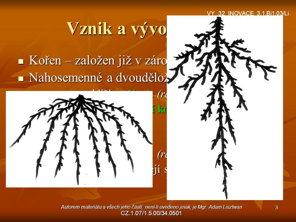Autorem materiálu a všech jeho částí, není-li uvedeno jinak, je Mgr. Adam Lisztwan CZ.1.07/1.5.00/34.0501 3 Vznik a vývoj kořene Kořen – založen již v