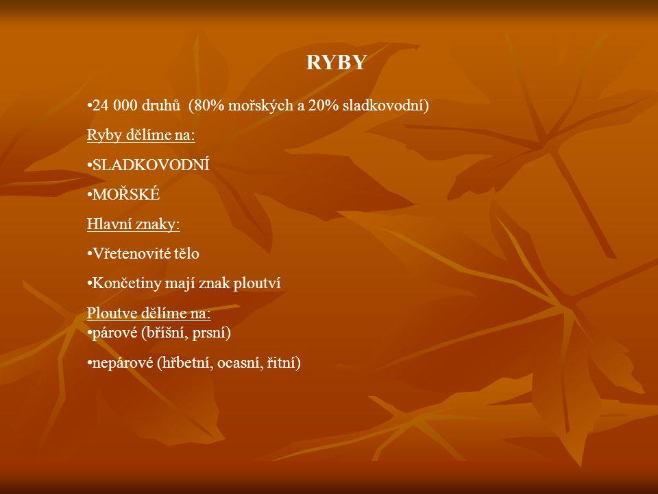 ANATOMIE RYB http://www.akvarijni.cz/grafika/ryba.jpg