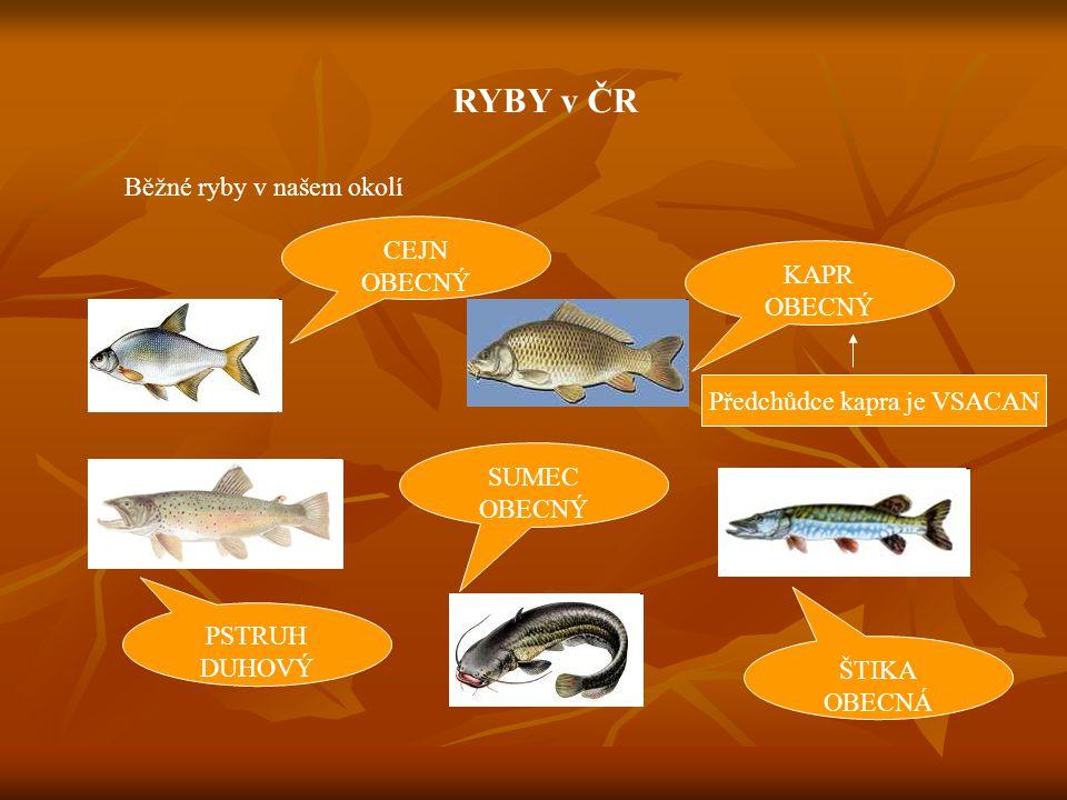 RYBY v ČR Běžné ryby, které u nás zdomácněly Amur Tolstolobik Pstruh Americký