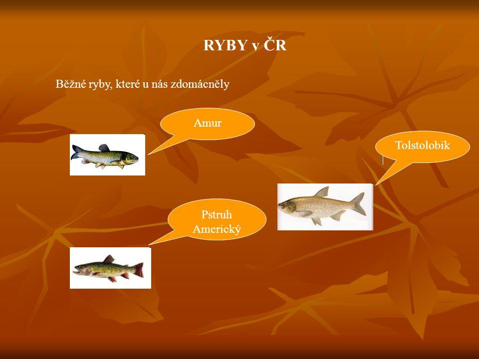 ÚKOL Prohlédněte si obrázky ryb a řekněte, které z nich jsou na Všem jídelníčku?