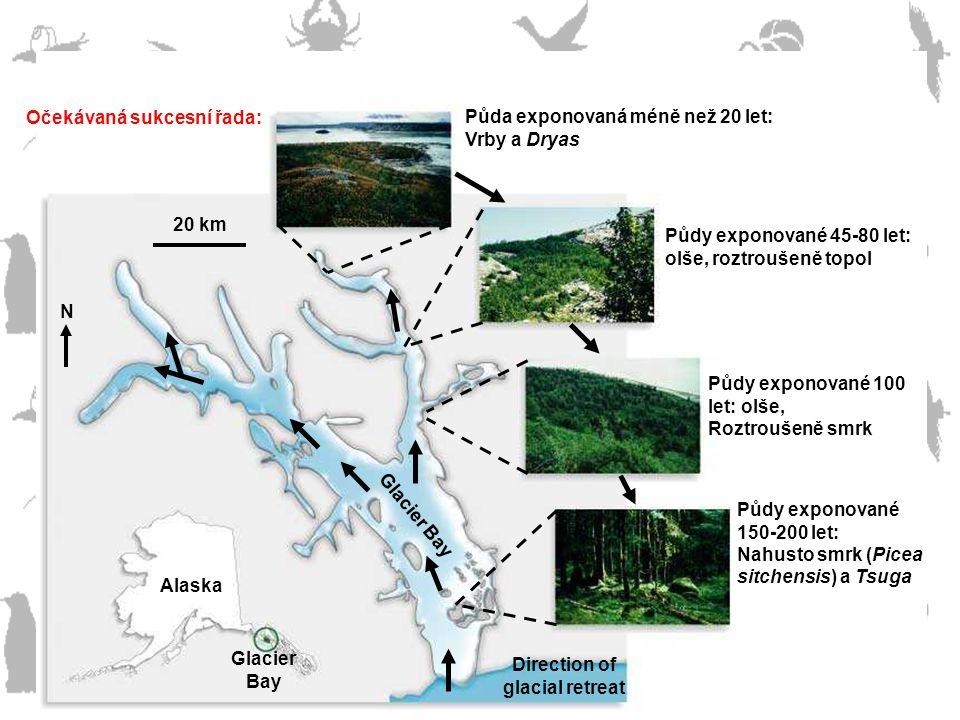 Glacier Bay Alaska Očekávaná sukcesní řada: Půda exponovaná méně než 20 let: Vrby a Dryas Půdy exponované 45-80 let: olše, roztroušeně topol Půdy expo