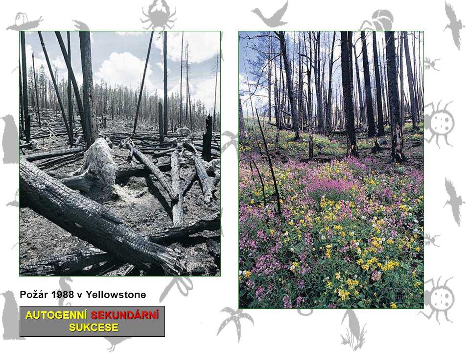 Požár 1988 v Yellowstone AUTOGENNÍ SEKUNDÁRNÍ SUKCESE SUKCESE