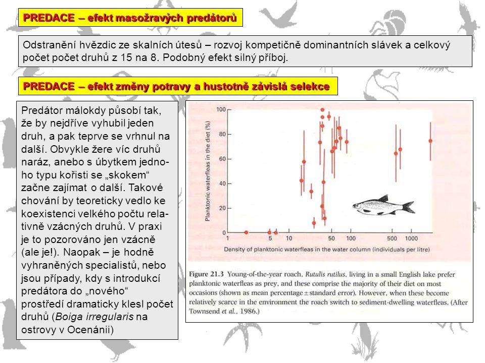 PREDACE – efekt masožravých predátorů Odstranění hvězdic ze skalních útesů – rozvoj kompetičně dominantních slávek a celkový počet počet druhů z 15 na