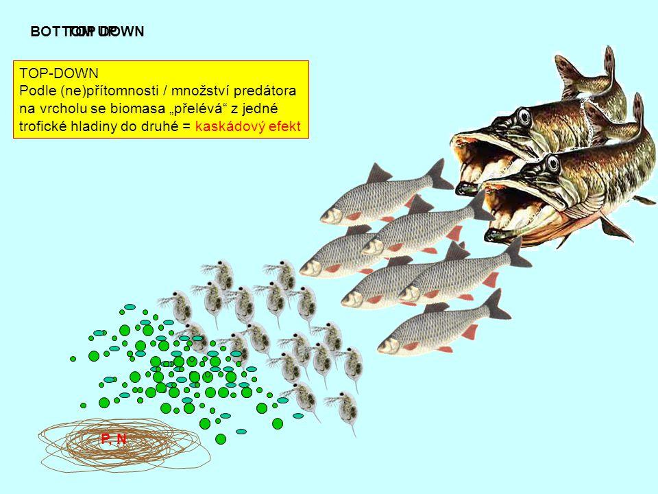 """P, N BOTTOM UPTOP DOWN TOP-DOWN Podle (ne)přítomnosti / množství predátora na vrcholu se biomasa """"přelévá"""" z jedné trofické hladiny do druhé = kaskádo"""