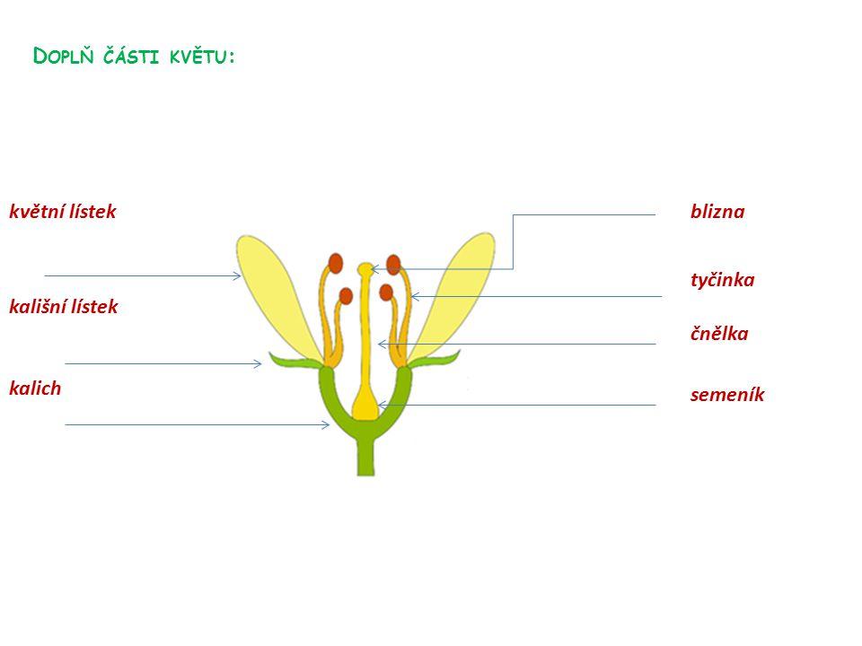 D OPLŇ ČÁSTI KVĚTU : blizna tyčinka čnělka semeník květní lístek kališní lístek kalich