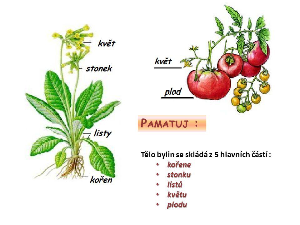 P AMATUJ : Tělo bylin se skládá z 5 hlavních částí : kořene kořene stonku stonku listů listů květu květu plodu plodu