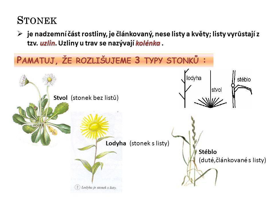 S TONEK uzlinkolénka  je nadzemní část rostliny, je článkovaný, nese listy a květy; listy vyrůstají z tzv. uzlin. Uzliny u trav se nazývají kolénka.