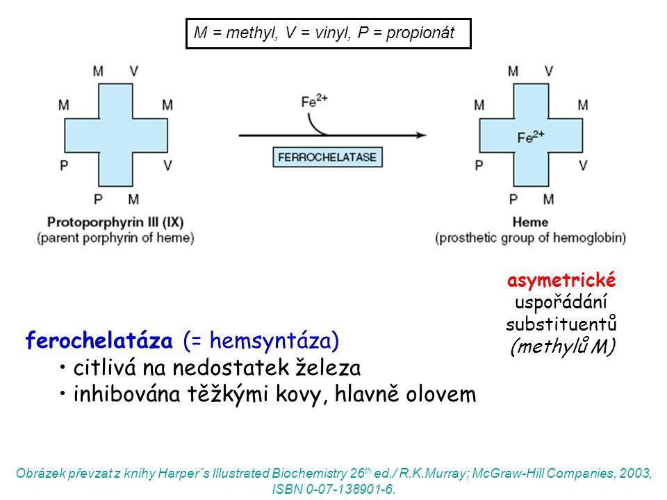 asymetrické uspořádání substituentů (methylů M) ferochelatáza (= hemsyntáza) citlivá na nedostatek železa inhibována těžkými kovy, hlavně olovem M = methyl, V = vinyl, P = propionát