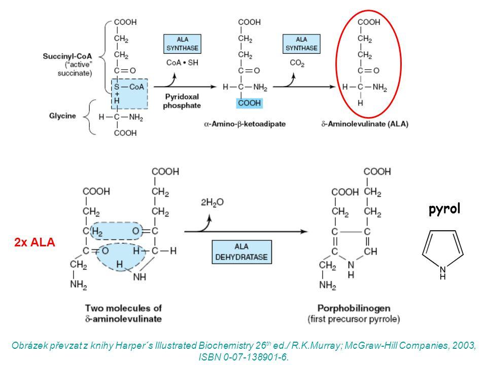 2x ALA pyrol Obrázek převzat z knihy Harper´s Illustrated Biochemistry 26 th ed./ R.K.Murray; McGraw-Hill Companies, 2003, ISBN 0-07-138901-6.
