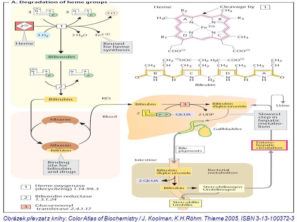 Obrázek převzat z knihy: Color Atlas of Biochemistry / J.