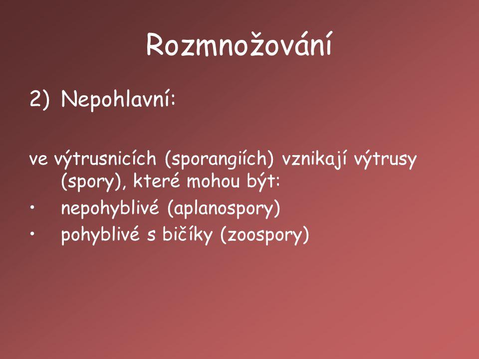 Rozmnožování 2)Nepohlavní: ve výtrusnicích (sporangiích) vznikají výtrusy (spory), které mohou být: nepohyblivé (aplanospory) pohyblivé s bičíky (zoospory)