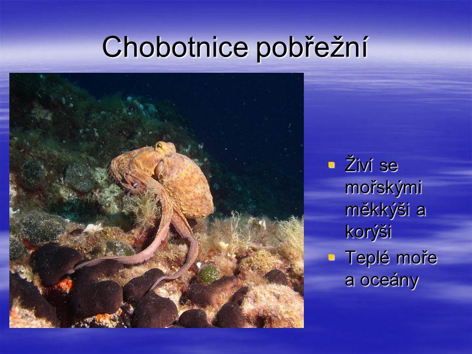 Chobotnice pobřežní  Živí se mořskými měkkýši a korýši  Teplé moře a oceány