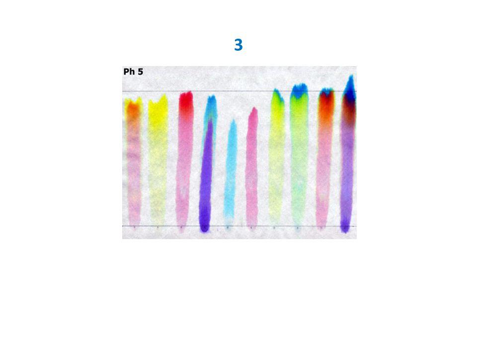 Chromatografie barviv hnědého fixu (vzestupná, na chromatografickém papíře) Postup: Ustřihni si 10 cm dlouhý pruh chromatografického papíru.