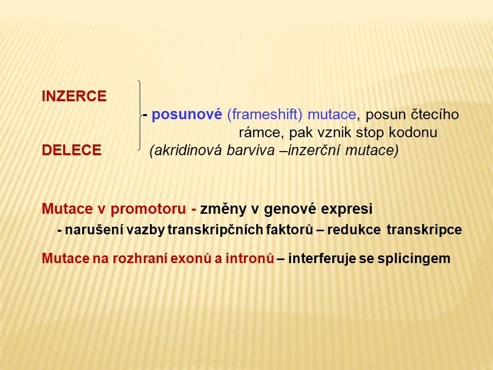 INZERCE - posunové (frameshift) mutace, posun čtecího rámce, pak vznik stop kodonu DELECE (akridinová barviva –inzerční mutace) Mutace v promotoru - z