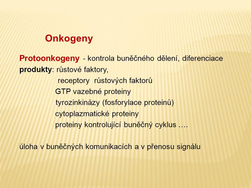 Onkogeny Protoonkogeny - kontrola buněčného dělení, diferenciace produkty: růstové faktory, receptory růstových faktorů GTP vazebné proteiny tyrozinki