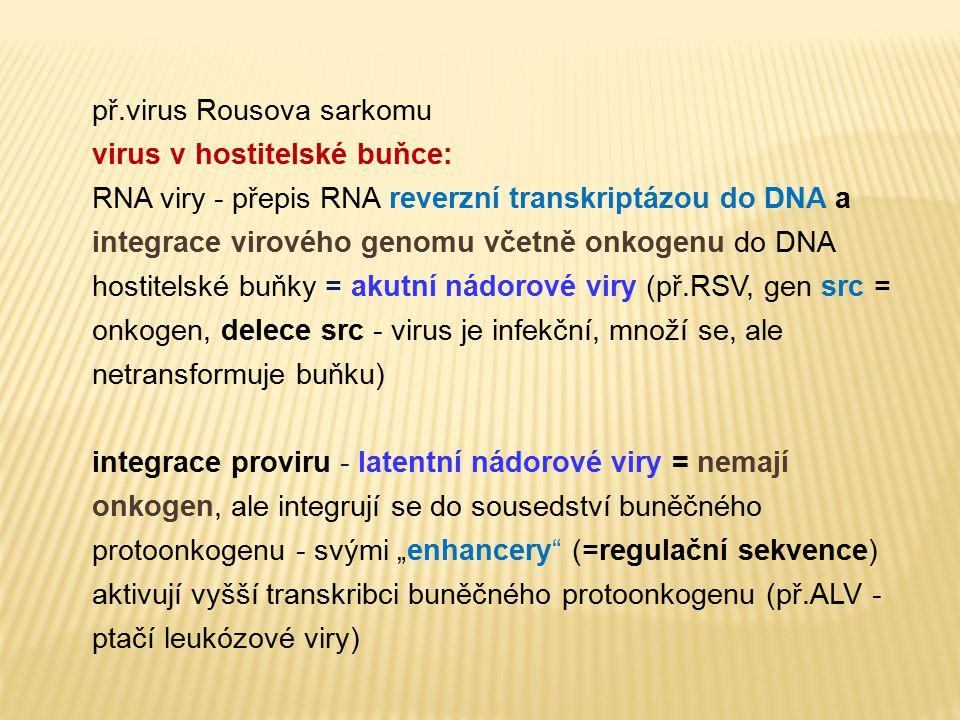 př.virus Rousova sarkomu virus v hostitelské buňce: RNA viry - přepis RNA reverzní transkriptázou do DNA a integrace virového genomu včetně onkogenu d