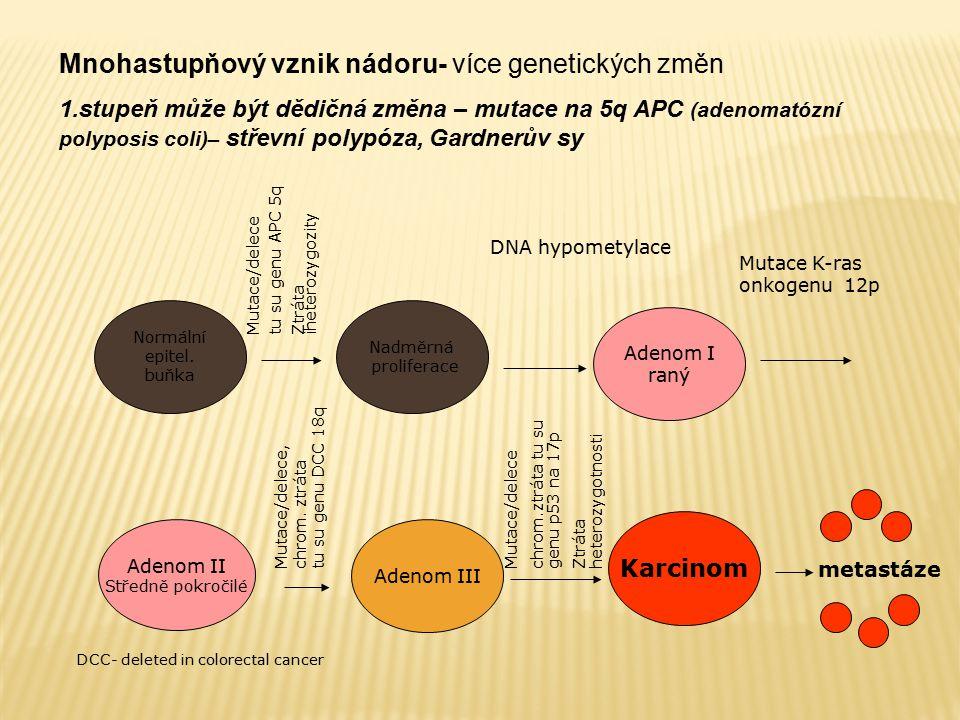 Normální epitel. buňka Nadměrná proliferace Adenom I raný Adenom II Středně pokročilé Adenom III Karcinom Mutace/delece tu su genu APC 5q Ztráta ihete