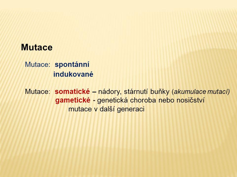 Mutace Mutace: spontánní indukované Mutace: somatické – nádory, stárnutí buňky (akumulace mutací) gametické - genetická choroba nebo nosičství mutace